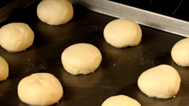 Rolls rising in oven video