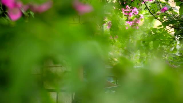 Romantic Woman on flowered balcony video