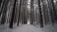 Ronin Stabilized shot walking down trail through long line of pines in winter video