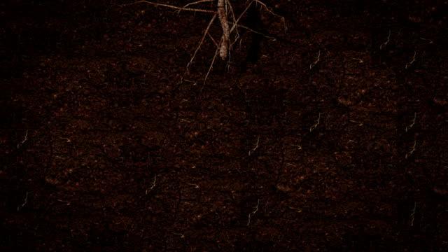 Root growing underground HD video