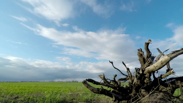Root of a Tree and Clouds Sweep Over the Green Field video