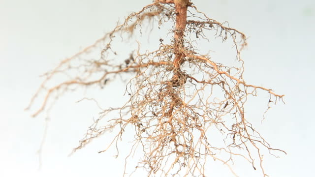 Root System video