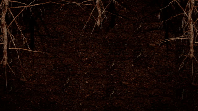 Roots growing underground HD video
