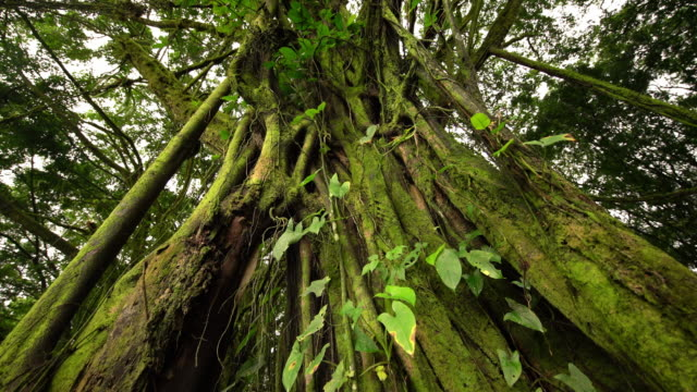 TU Roots of a tropical tree video
