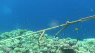 ropes on reef dahab video