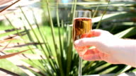 Rosé Wine in Garden video