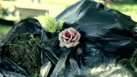 Rose, Dustbin on graveyard video