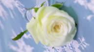 Rose flask video