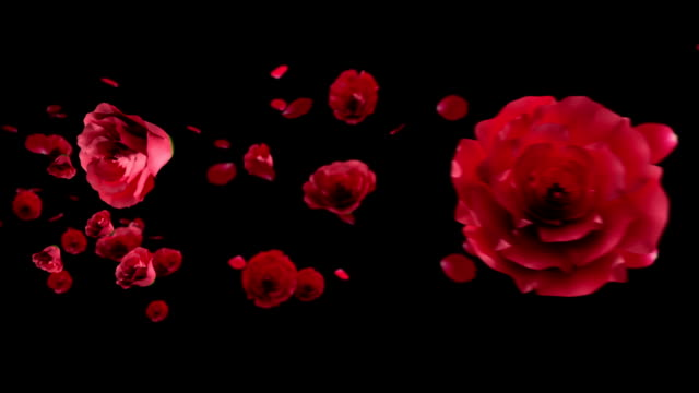 Rose in the wind on black video