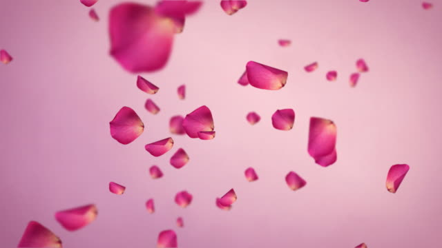 Rose Petals Falling Hd video