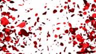 Rose Petals forming a Heart video