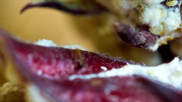 Rosella fruit - Ants create a white net and make plant diseases. video