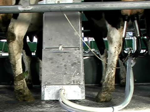 Rotary Milking video