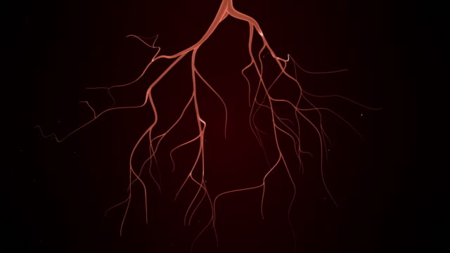 Rotating Blood Vessels video