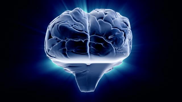 Rotating brain video
