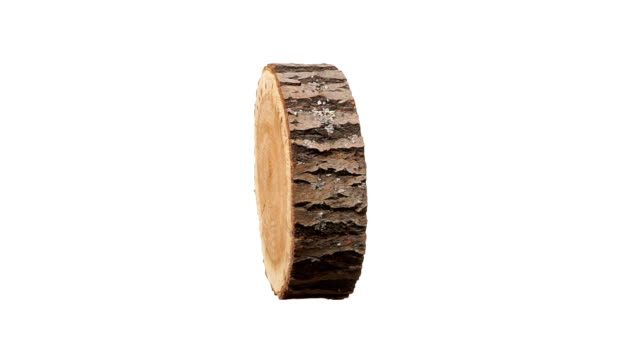 Rotating cross section of tree stump, isolated on white background video