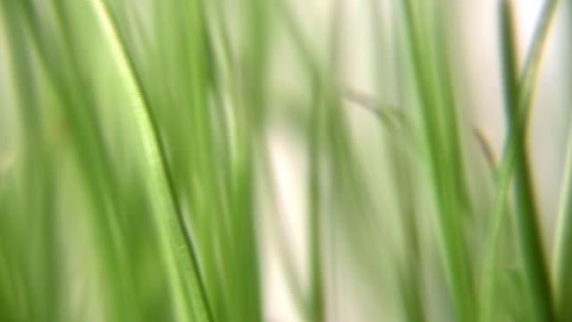 Rotating grass. video