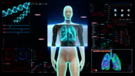 Rotating Human Female  lungs, Pulmonary Diagnostics in digital display. video