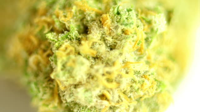 Rotating macro product shot of high quality marijuana, on a solid white background video