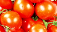 rotating tomatoes - zoom out video