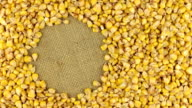 Rotation of the corn grains lying on sackcloth video