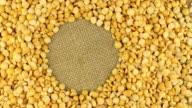 Rotation of the dried peas grains lying on sackcloth video