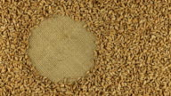 Rotation of the wheat grains lying on sackcloth video