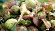 Rotten and ripe pears video