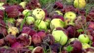 Rotten apples on grass video