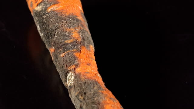 Rotten carrot on a black background video