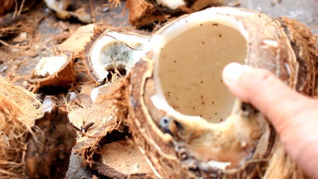 Rotten coconut video