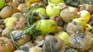 Rotting apples video