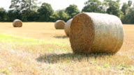 Round straw bales in a field video