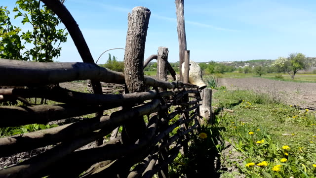 Round Wicker fence and nature video