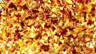 Rowan tree in autumn season video