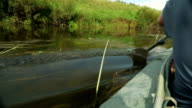 Rowing a paddle in the calm water of the river. video