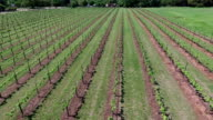 Rows and Rows To make Wine video