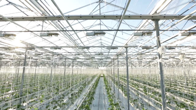 Rows of plants in a large greenhouse. The camera shoots from the top video