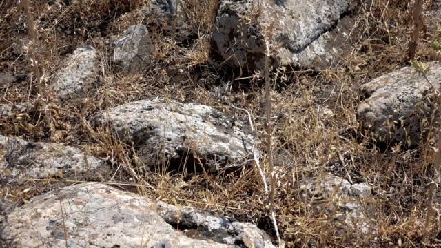 Rubble from Old Roman Road in Barren Field in Israel video