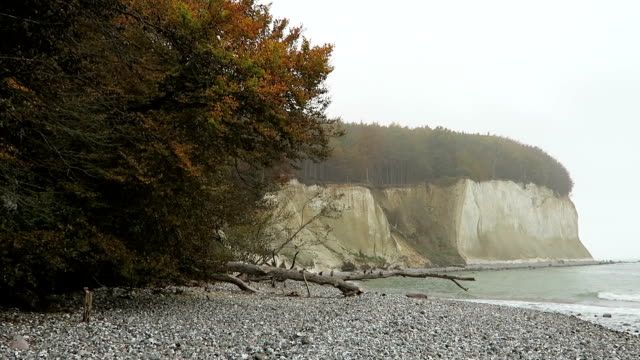 Rugen island chalk rock cliff landscape in autumn time. colorful beech tree forest. (Mecklenburg-Vorpommern, Germany). Baltic sea video