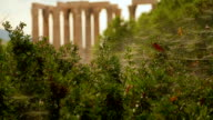 Ruins of greatest temple in ancient Greece, ancient site seen through bushes video