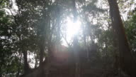 Ruins of the Mayan pyramids in the jungles of Guatemala video