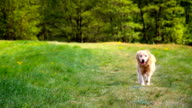 Running dog in slowmotion video