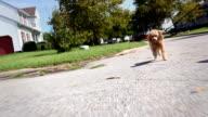 Running Dog video