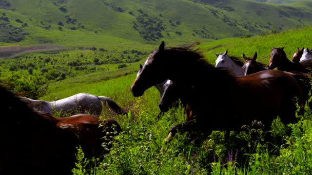 Running Horses video