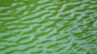 Running ripple on the green water. Moving background with meditative and hypnotic effect. video