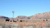 rural dry farmland video