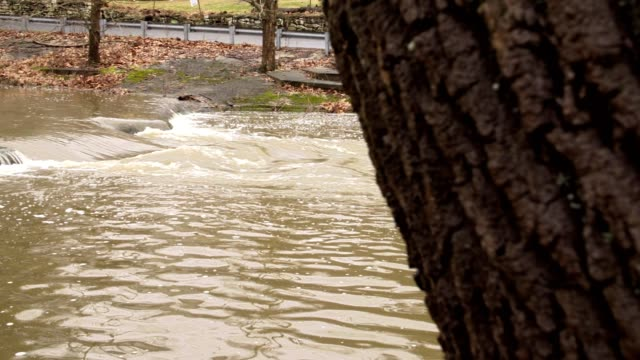Rushing river water by tree tight shot video