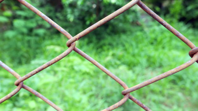 Rust Wire Fence with Green Forest video