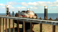 Rusty bolder in the harbor video